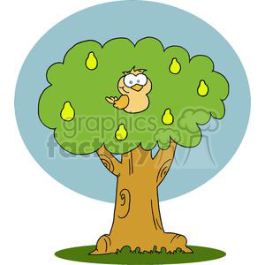 A Partridge in a Pear Tree clipart. Royalty-free image # 377882