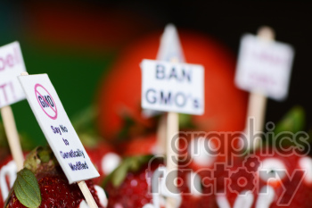 strawberries protesting GMOs photo. Royalty-free photo # 391264