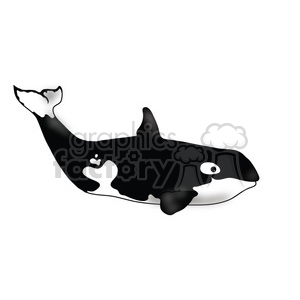 Killer Whale 09 2nd baby clipart. Commercial use image # 391580