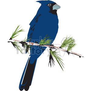blue jay bird clipart. Royalty-free image # 395002