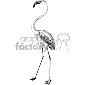 old vintage distressed flamingo retro GF vector design vintage 1900 vector art GF clipart. Royalty-free image # 402512
