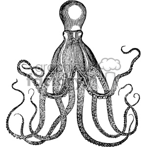 old vintage distressed octopus retro GF vector design vintage 1900 vector art GF clipart. Commercial use image # 402557