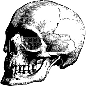vintage retro illustration black+white anatomy body art skull
