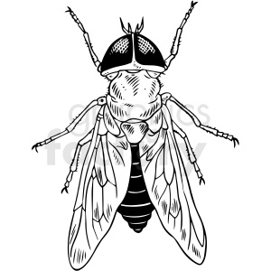 black and white fly vector clipart
