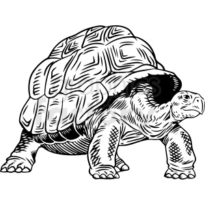 black and white turtle vector clipart clipart. Royalty-free image # 412721