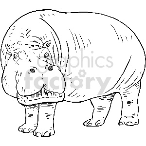 black+white hippo animal