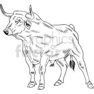 animals bull black+white