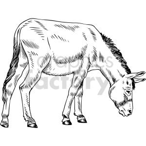 animals donkey jackass black+white
