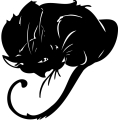 Resting black cat with long curly tail