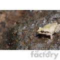 frog on a rock  jpg