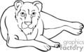 lion lions   anml060_bw clip art animals  gif