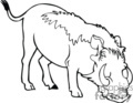 black and white wild boar hog
