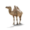 camel photo vector clip art image