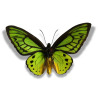 butterfly butterflies insect   2a8508lowres photos animals