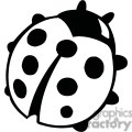 Black and white ladybug