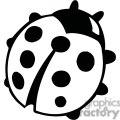 Black and white ladybug