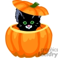 kitten hiding in a pumpkin