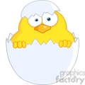 4746-Royalty-Free-RF-Copyright-Safe-Surprise-Yellow-Chick-Peeking-Out-Of-An-Egg-Shell