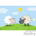 royalty free rf clipart illustration white sheep and farting black head sheep on a meadow  gif, png, jpg, eps, svg, pdf