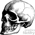 vintage vector three quater view skull art  gif, png, jpg, eps, svg, pdf