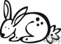 black and white  bunny with spots