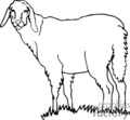 lamb sheep   anml099_bw clip art animals