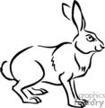 Black and white rabbit standing