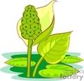 Blooming water plants