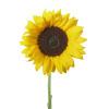sunflower vector clip art image
