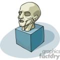 Cartoon head muscular structure