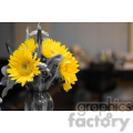 yellow sunflower  jpg