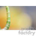 bamboo tree branch  jpg