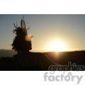 sunset female  jpg