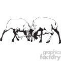 black and white Elks fighting