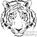 tiger head black and white illustration