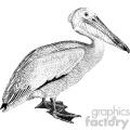 old vintage distressed pelican retro vector design vintage 1900 vector art GF