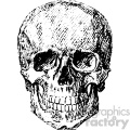 vintage vector skull art