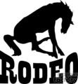 Rodeo bronco horse
