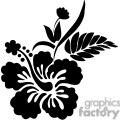 black and white Hawaiian Hibiscus flower