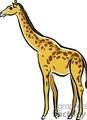 giraffe gif, jpg