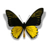 butterfly butterflies insect   2a8510lowres photos animals