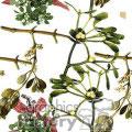 120506-mistletoe