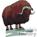 Huge Ox
