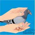 pigeon being held