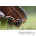 baseball glove in grass blurred  jpg