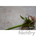 dead flower  jpg