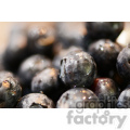 pile of blue berries  jpg