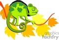 animals animal chameleon chameleons lizard lizards   zoo-007-9-2004 clip art animals