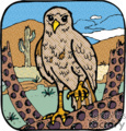 hawk on cactus in the desert