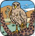 Hawk on cactus in the desert